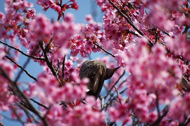 横浜 清水ヶ丘公園 春の花