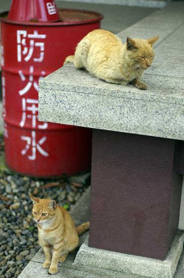 川崎大師の猫-2