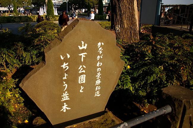 山下公園のいちょう 景勝50選