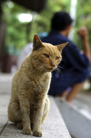 川崎大師の兄弟猫