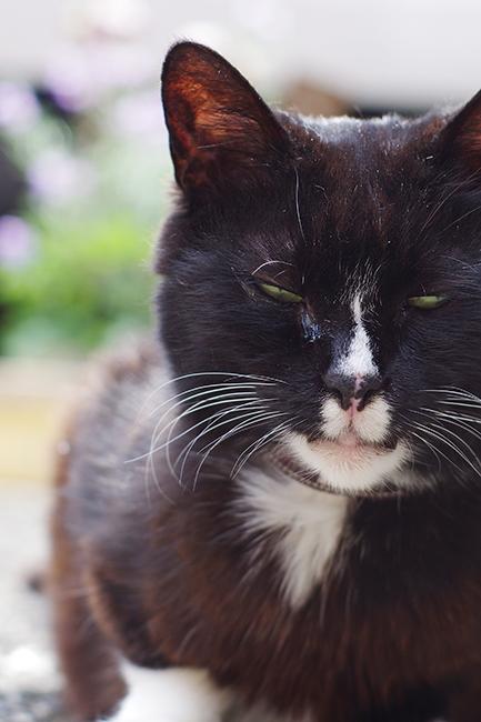 1504中華街の猫-2