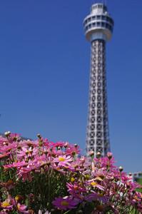 マリンタワーと春の花