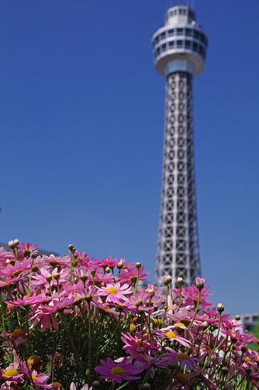1504花とマリンタワー-3