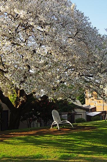 1503山手68番館の桜3