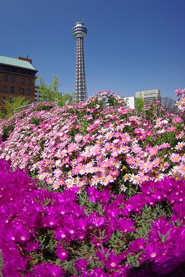 1504花とマリンタワー