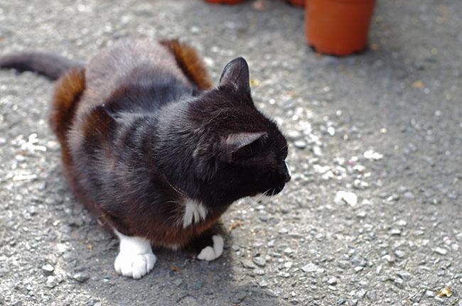 1504関帝廟の猫