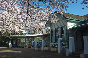 横浜の桜 山手68番館 テニス発祥の地