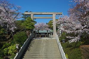 横浜の桜 伊勢山皇大神宮