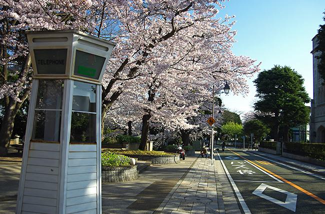 1503山手の桜-4