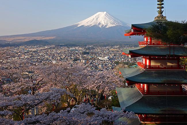 新倉浅間神社 桜と富士山と五重の塔