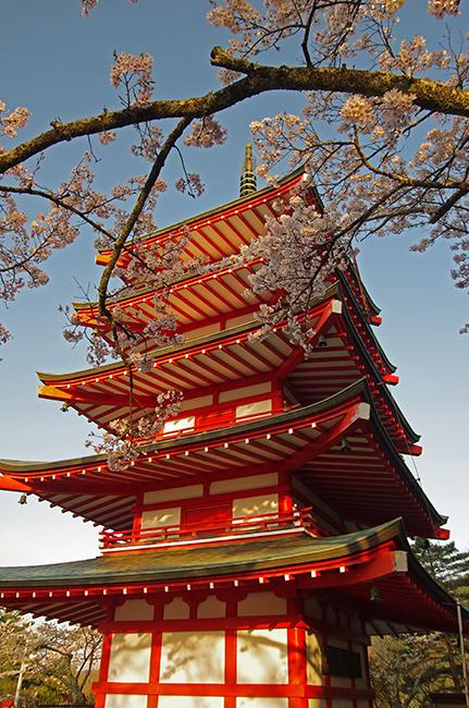 新倉浅間神社の富士山と桜-3