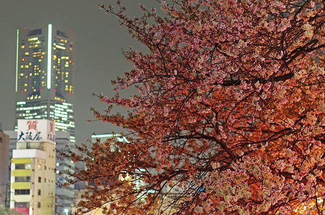 1504大岡川と夜桜-2