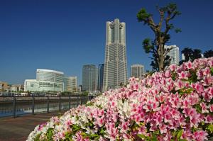 横浜ランドマークタワーとツツジ