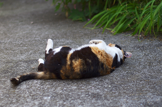 山手の猫150511-2