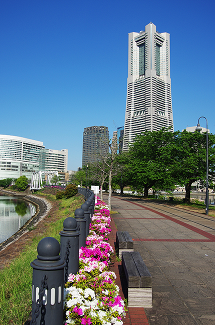 横浜ランドマークつつじ1504-5