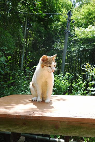 0629天園休憩所の猫-3