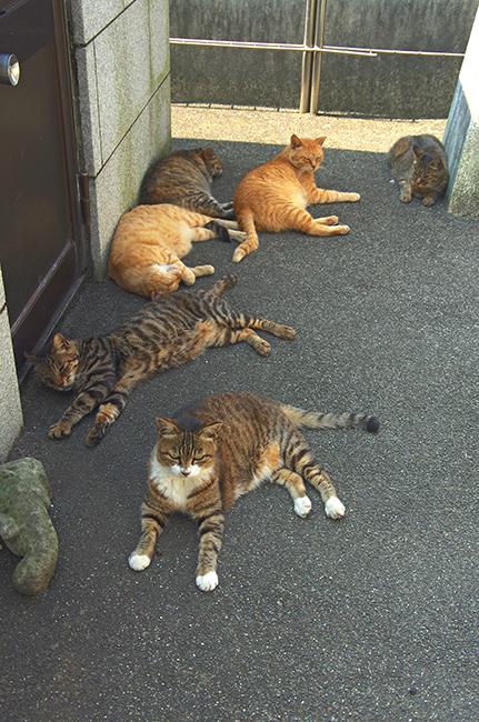 光明寺 猫1508