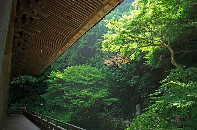 妙本寺1508-2