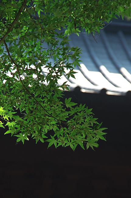 妙本寺1508-6