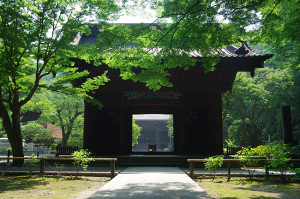妙本寺の花 8月ノウゼンカズラは遅かった