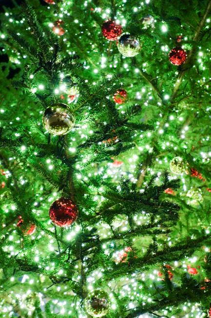 クリスマスツリーと家1105-4