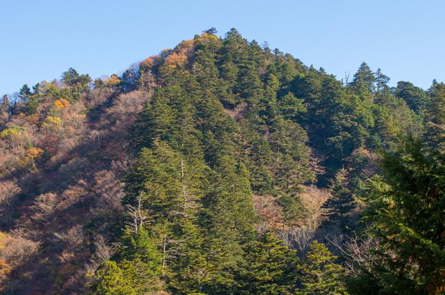 丹沢モミの原生林-3