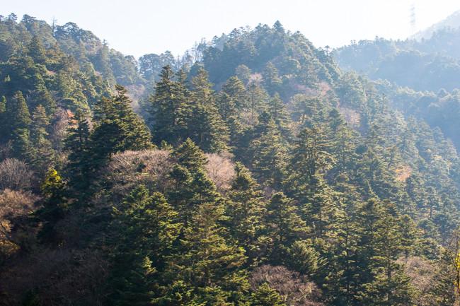 丹沢札掛のモミの原生林 かながわの景勝50選 その11