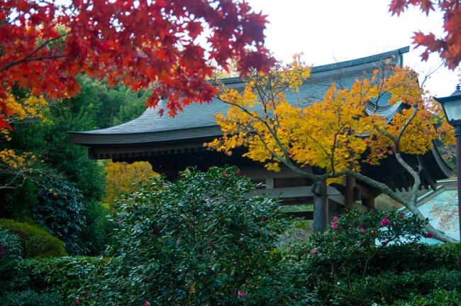 鎌倉海蔵寺の紅葉-9