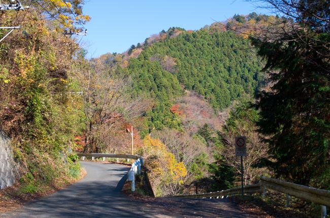 丹沢モミの原生林