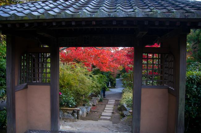 鎌倉海蔵寺の紅葉-7