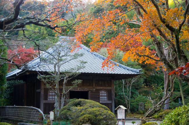 鎌倉海蔵寺の紅葉-6