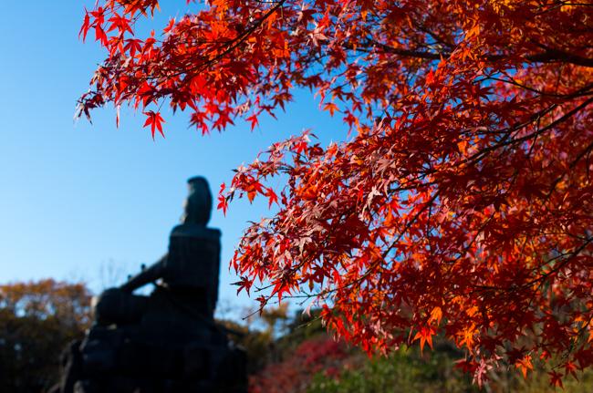 鎌倉源氏山公園の紅葉2015-8