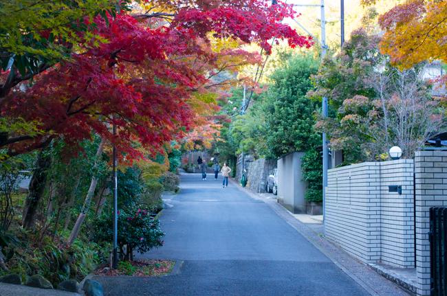 鎌倉海蔵寺の紅葉