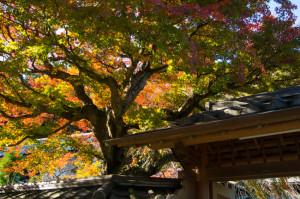 鎌倉 東慶寺の紅葉2015