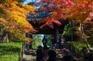 北鎌倉 円覚寺前の紅葉
