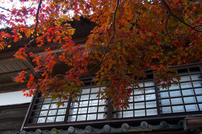 鎌倉海蔵寺の紅葉-4