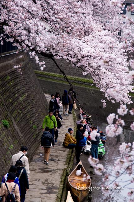 大岡川の桜160402-8