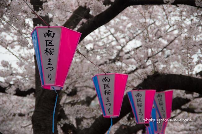 大岡川桜まつり160403-22
