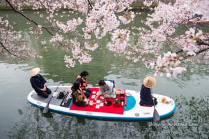 桜の下の茶会 大岡川の春