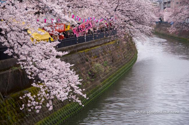 大岡川の桜160402-2