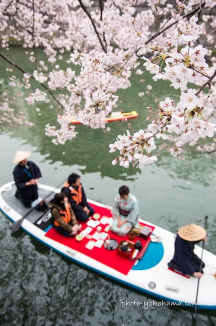 大岡川桜まつり160403-19