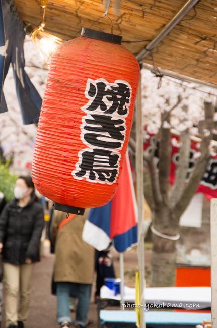 大岡川の桜160402-6