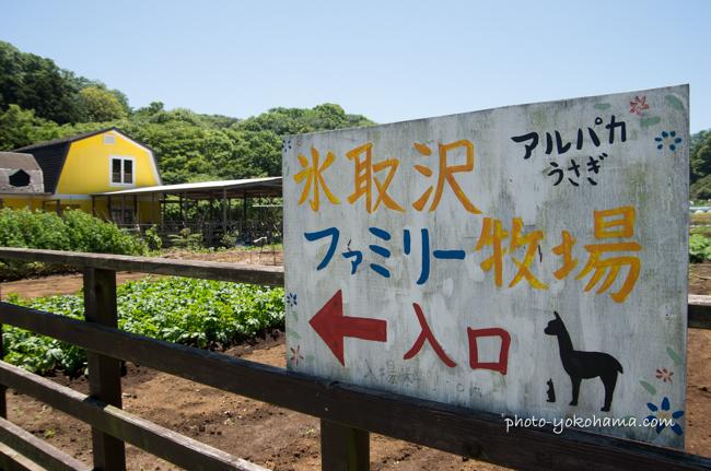 横浜アルパカ牧場